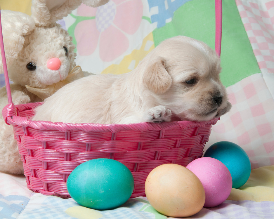 Easter-Puppies-10